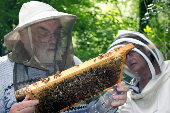 John Chapple is well-known authority on beekeeping and he gave our new queens the thumbs up.