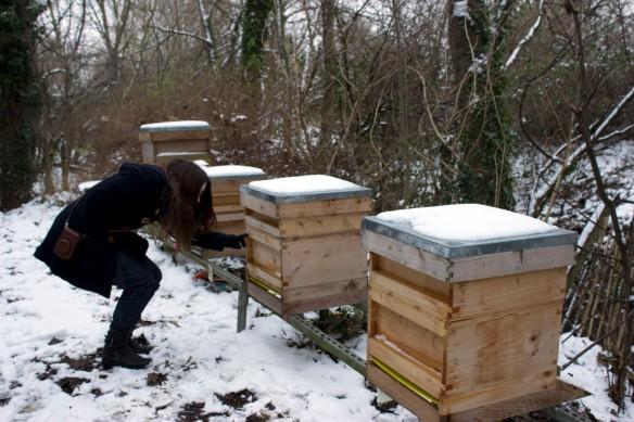 snowbees1