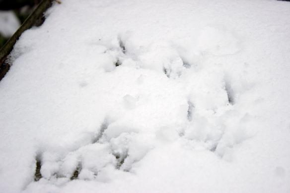 snowbees3