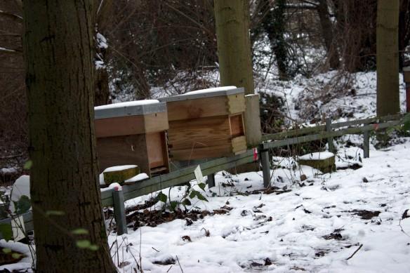 snowbees5