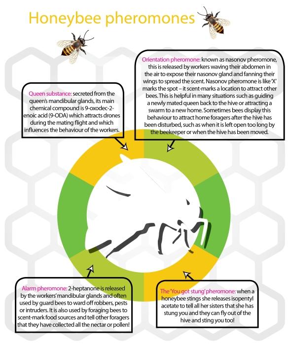 Mod 6.5 infographic pheromones