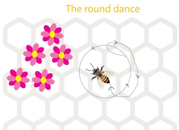 Mod 6.5 round
