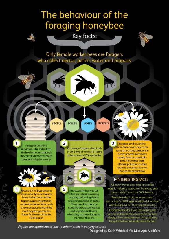 behaviour of foraging bee infographic