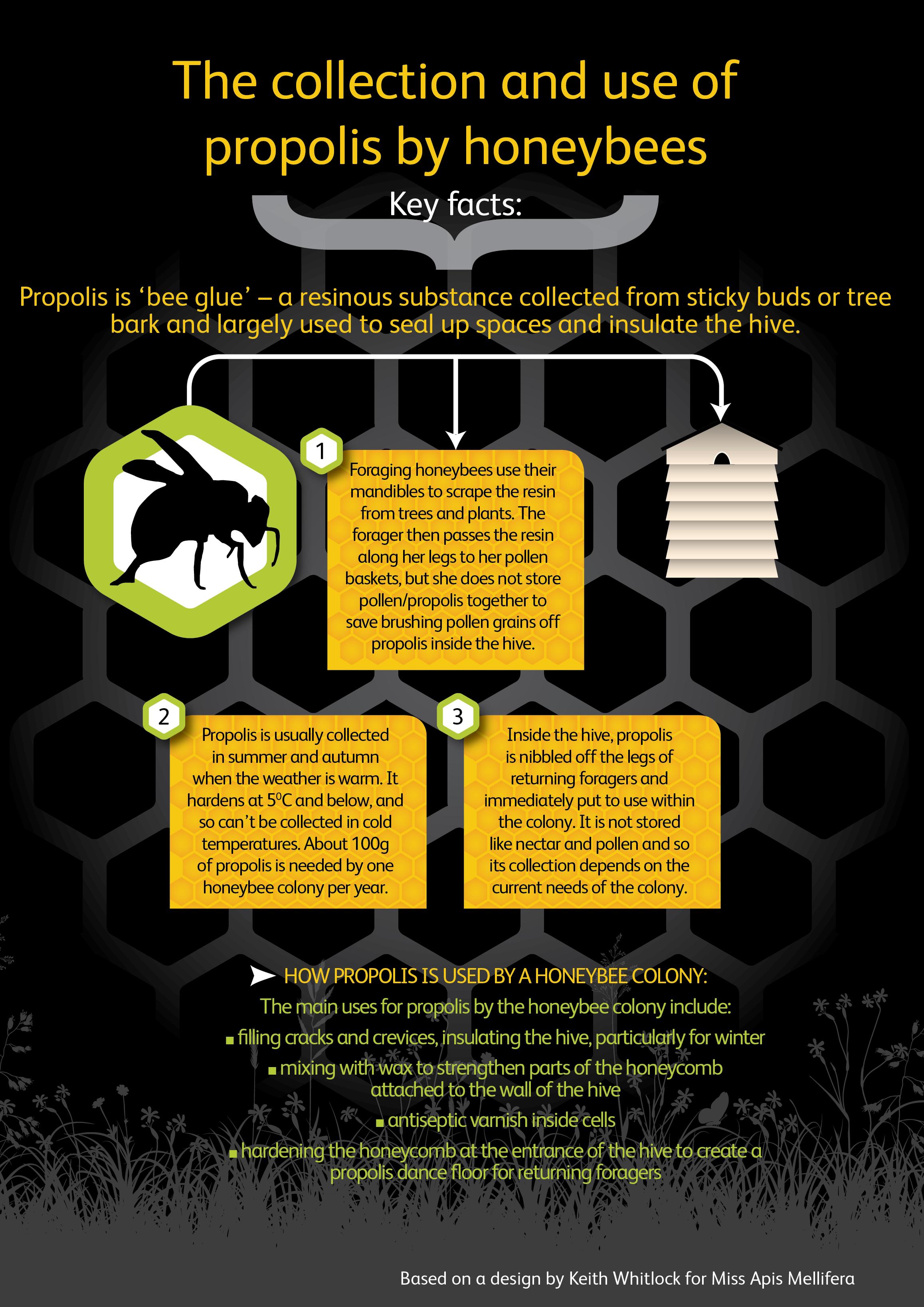 Winter studies: How honeybees use nectar, pollen, propolis
