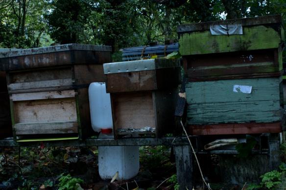 apiary 4