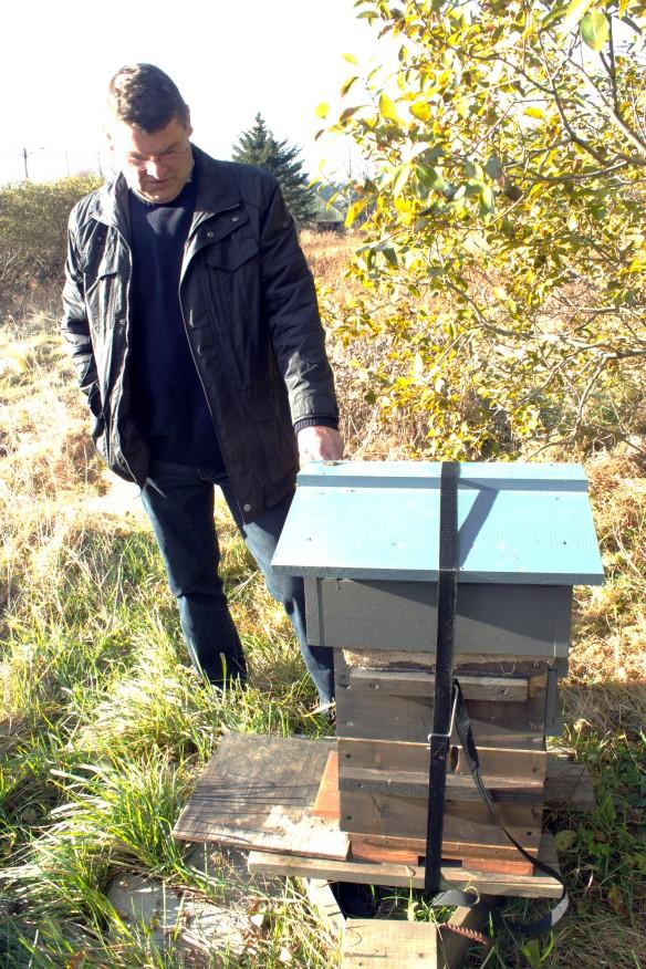 Icelandic bees_3