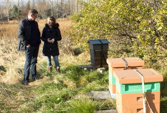 Icelandic bees_7