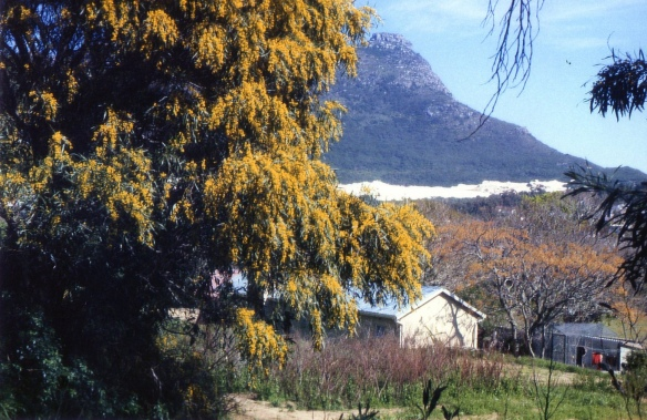 14 Nanny Africa_Cape Town, SA