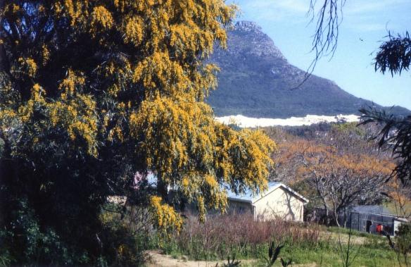 14 Nanny Africa_Cape Town, SA