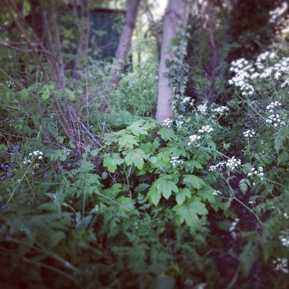 01 Overgrown apiary