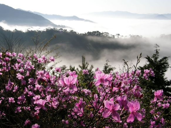 Rhododendron and clouds in Japan