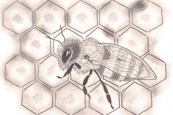 honeybeeinpencil1.1.15est crop