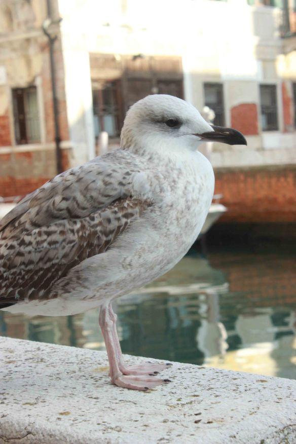 14 Venice_01_EST (13)