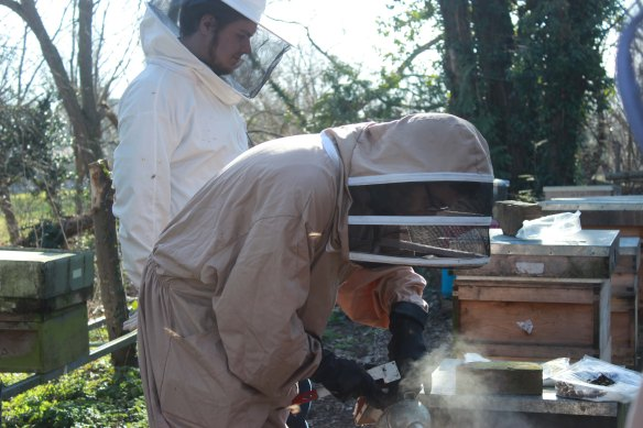 a jonesey beekeeping