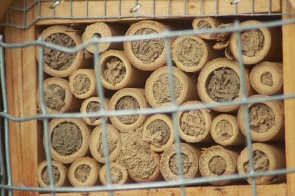 bees behind bars