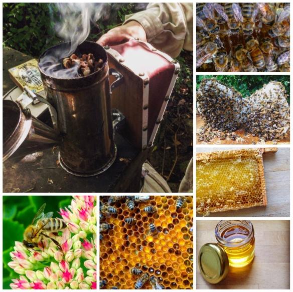 beekeeping notes