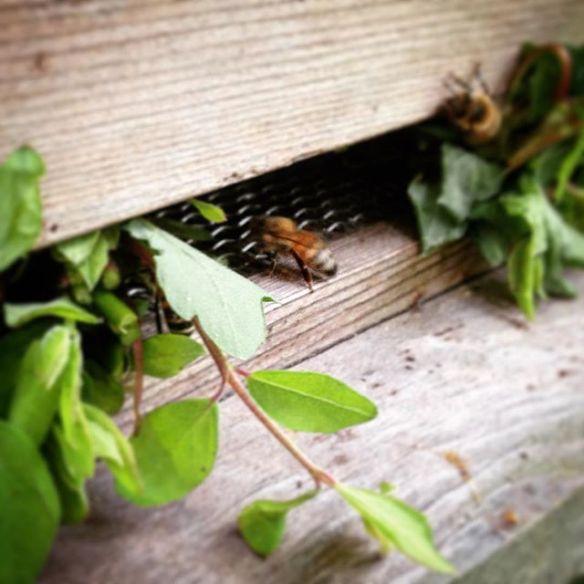 bee returns home