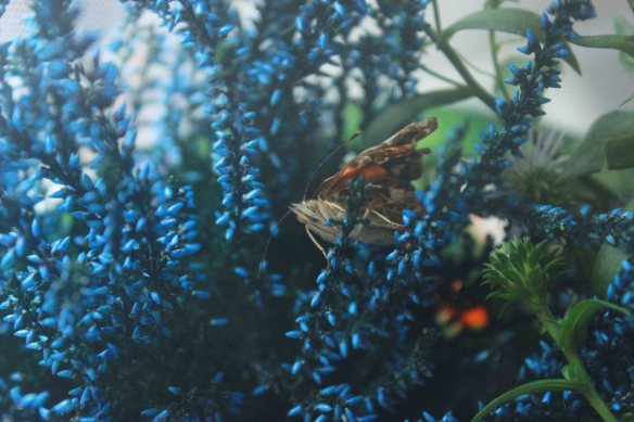 butterfly-foliage-small